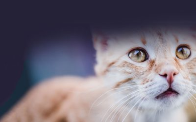 Saving FeLV Cats – Latest Tips, Tricks, and Practices