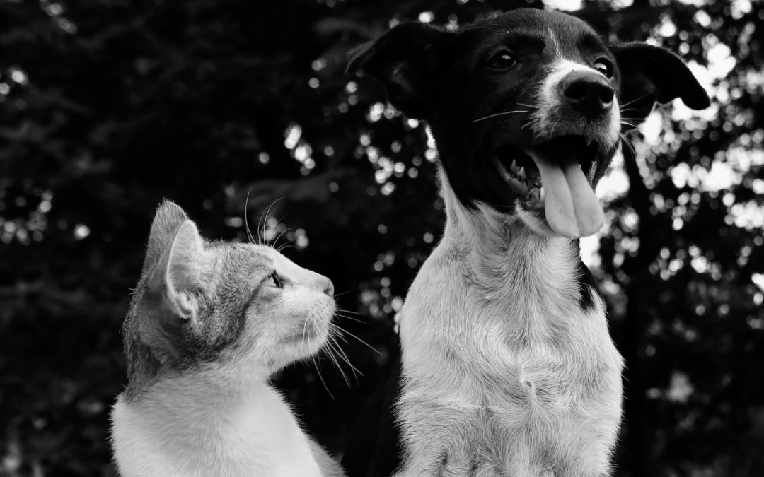Helping People Who Are Helping Animals: BLACK LIVES MATTER