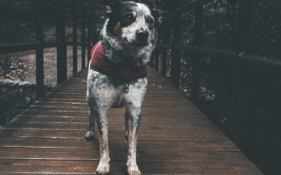 How to Prepare Your Animal Rescue for a Natural Disaster