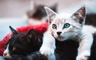 How to Write Grants to Fund Your Animal Rescue