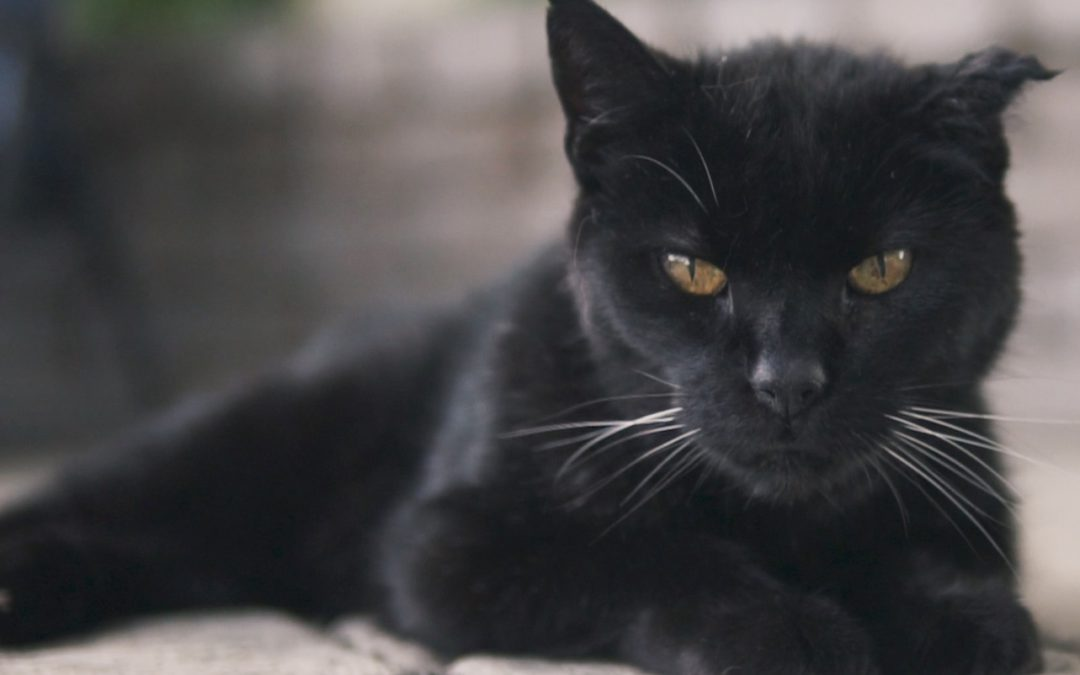 18 Reasons We're Lucky to Have Black Cats