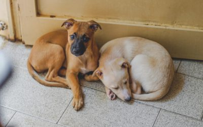 Increase Adoptions By Sending More Animals Home