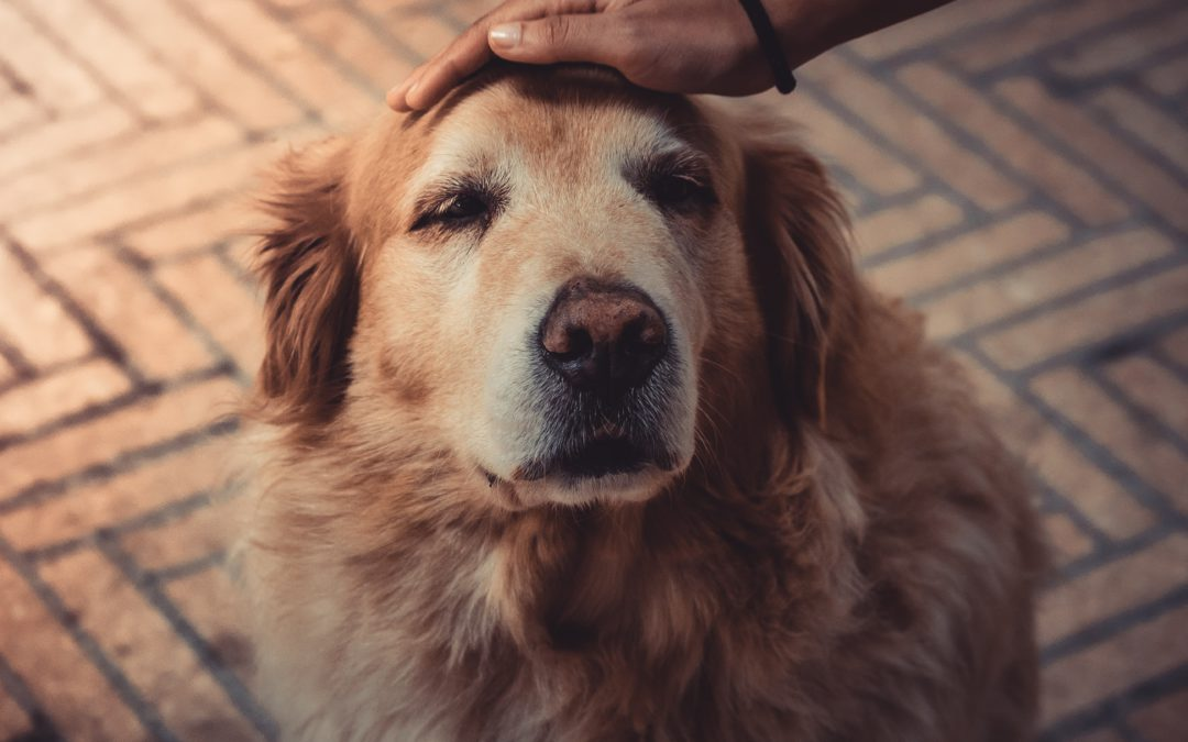 Changing the Perception of Adopting a Senior Pet