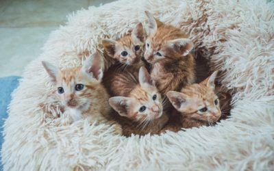 How to Socialize Shy Kittens