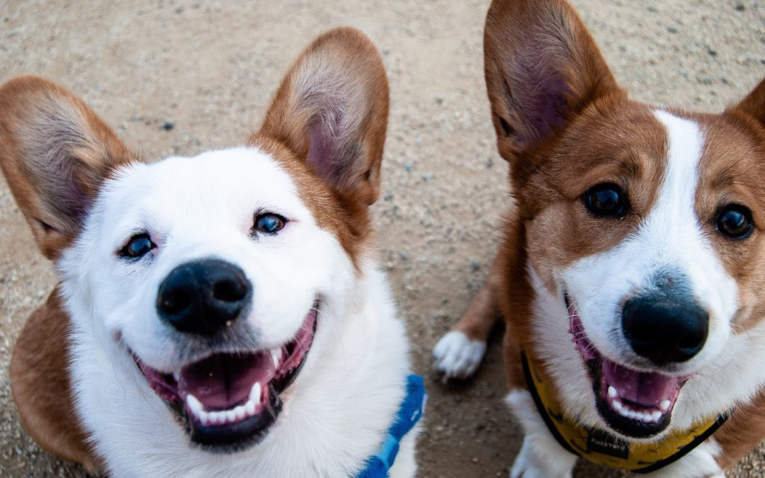 Creating Foster Teams to Save More Lives