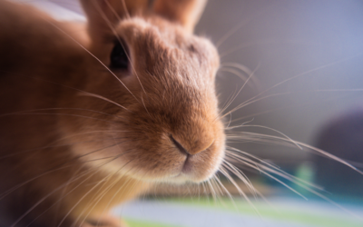Rescue Spotlight: Helping Homeless Rabbits Find Forever Homes