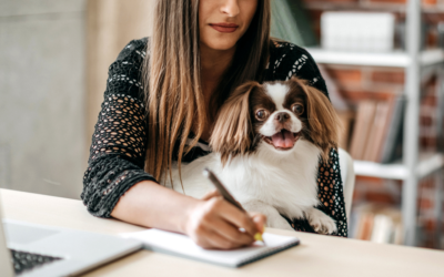 How to Write a Business Plan for Your Animal Rescue