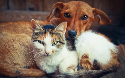 How to Start an Animal Rescue: A Pawlytics Guide