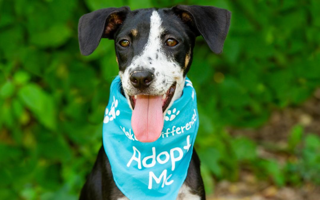 Adopting a Rescue Dog: A Pawlytics Guide