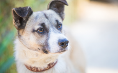 Create a Pet Adoption Form for Your Animal Rescue