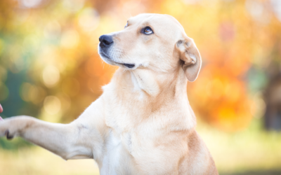 Tips for the First Day with Your Rescue Dog