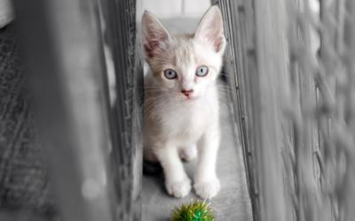How to Write a Fun Pet Adoption Bio