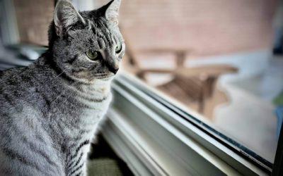 Rescue Spotlight: A Canadian Cat Rescue Providing Comprehensive Vet Care