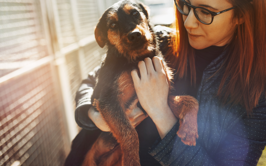 How to Build a Culture of Philanthropy into Your Animal Shelter