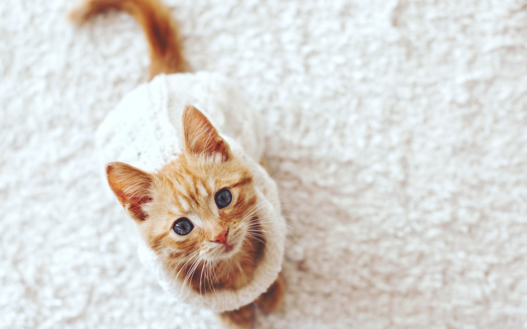 Your Guide to Adopting a Rescue Kitten